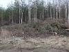 Груды спиленных под электролиниями деревьев