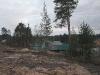 Кто будет убирать эти деревья, примыкающие к соседним участкам?
