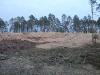 Готовая часть участков заканчивается обрывом, усыпанным отходами лесозаготовки. А вы готовы здесь строиться?