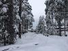 Красивый зимний пейзаж)) В центре - пожарный водоём квартала ГПТУ-27